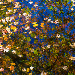 Fallen leaves on the surface of a wetland on the Duston property in Hampstead, New Hampshire.