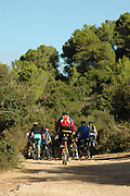Israel, Carmel Mountain, Carmel National Park, bicycle riders