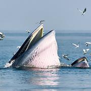Eden Whales