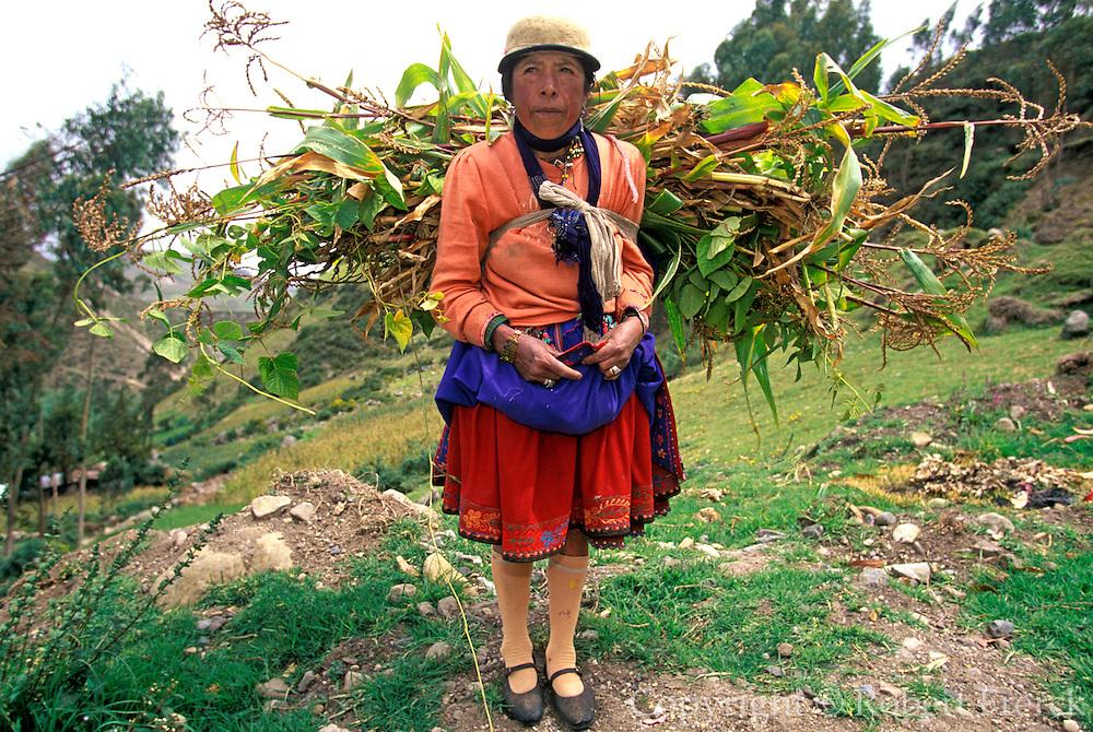 ECUADOR, HIGHLANDS, CANAR Canari Indian carrying fodder