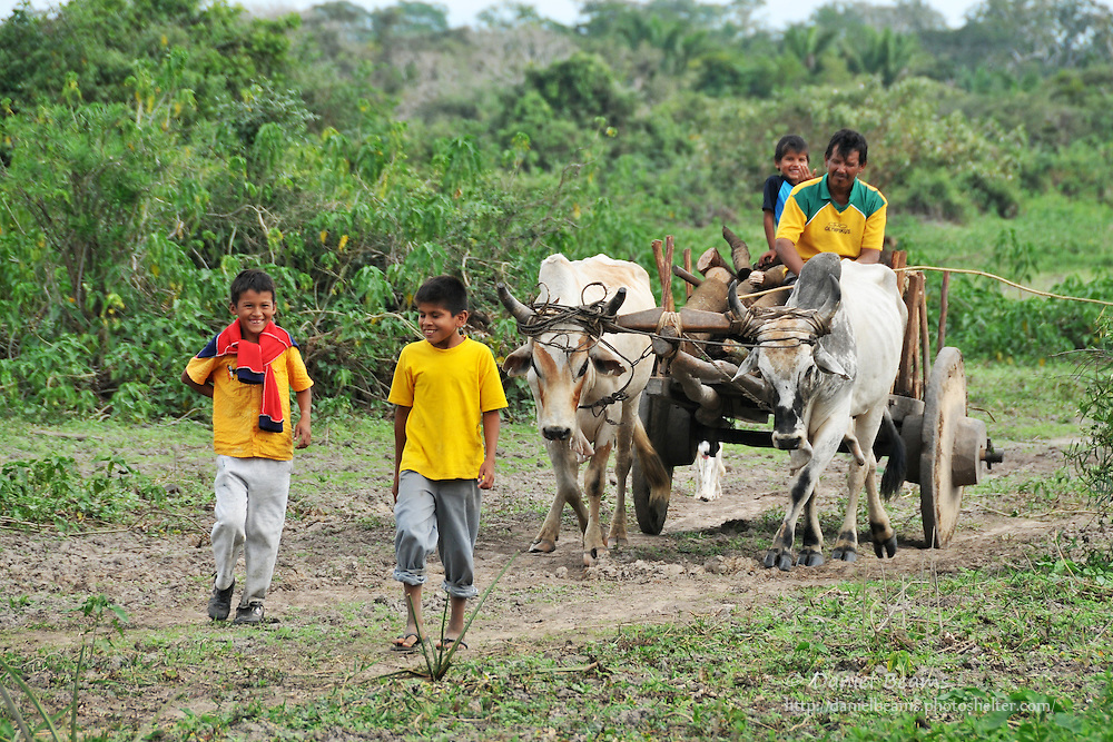 Boys leading oxen and cart near San Lorenzo de Moxos, Beni, Bolivia