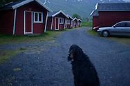 A dog in Mosjøen Camping