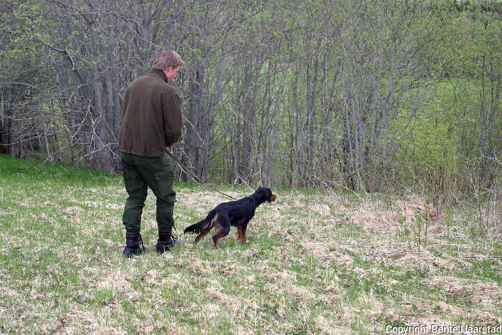 Pigeon training for bird hunting dogs.