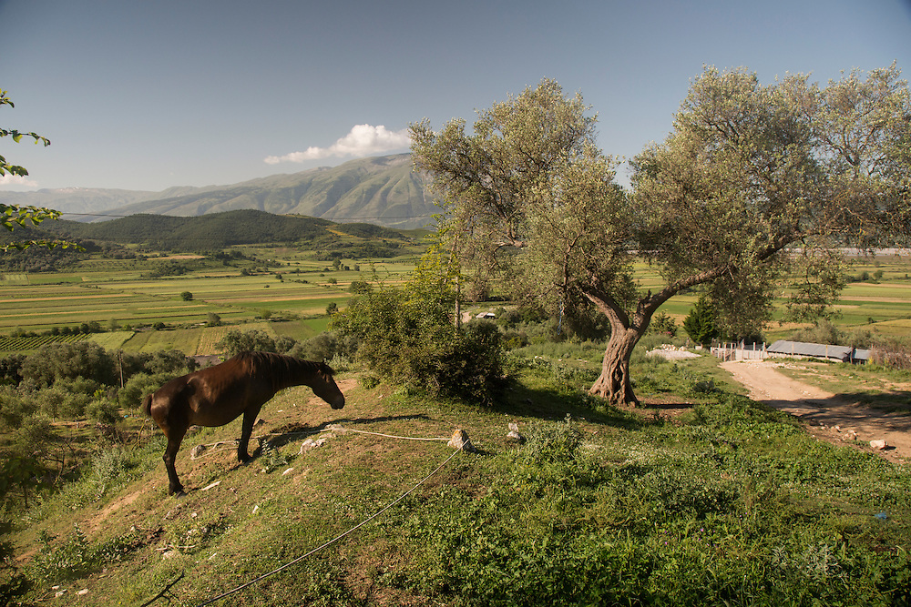 A horse stands on the edge of Kuta, an ancient village in southern Albania. The fields in the background will be flooded if the Pocem dam is built.