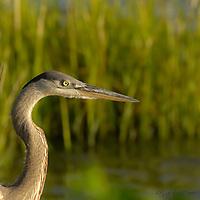 Birds of the Wetlands