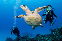 A young diver and his mother interact with a Hawksbill Sea Turtle <br /> <br /> Shot in Cayman Islands
