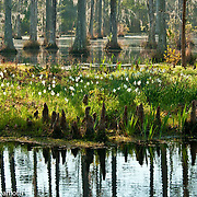 Cypress Gardens, Charleston, South Carolina