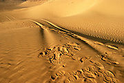 Desert Sand dune, Arava, Israel