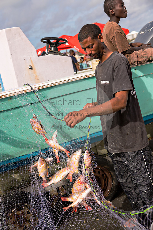 Workers remove snapper fish from nets at Montagu beach fish market Nassau, Bahamas.