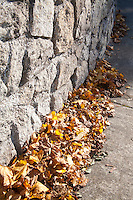 Autumn leaves gathered against a stone wall