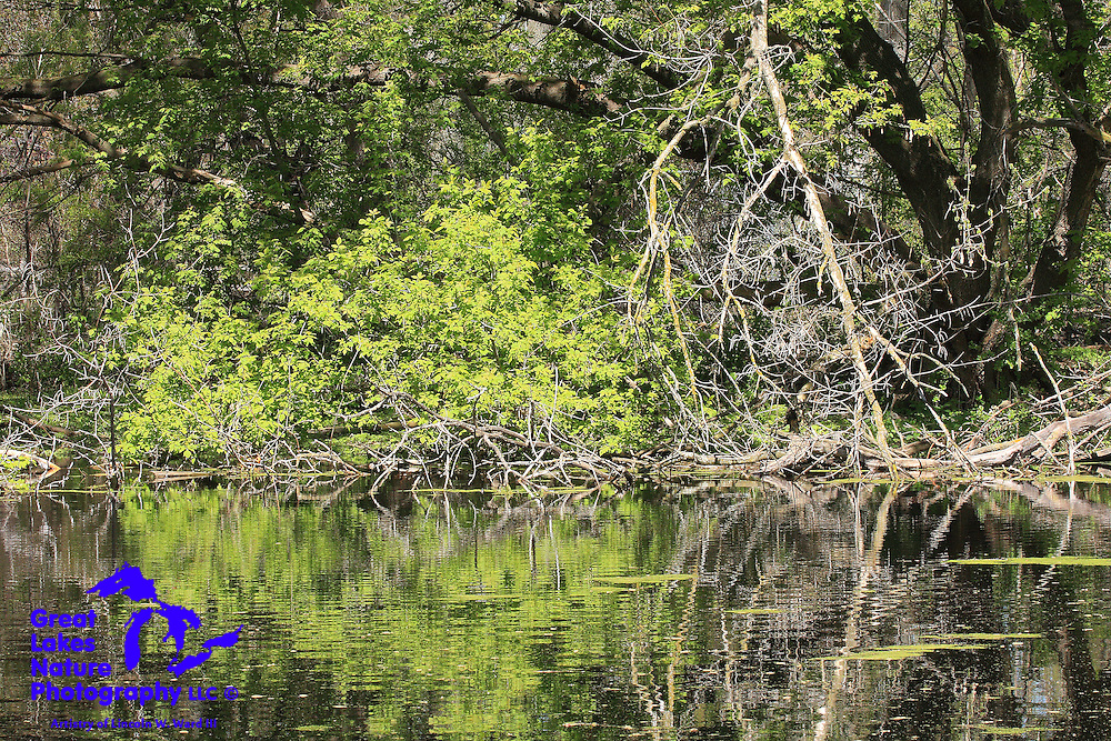 Spring foliage reflects from the surface of this natural pond.