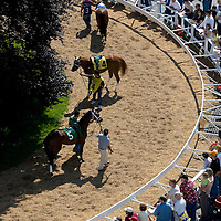 (PPAGE1) Monmouth Park 5/13/2006 Horses being shows in the paddock of Monmouth Park just prior to the start of the 7th race of the day.   Michael J. Treola Staff Photographer.....MJT