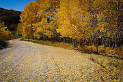 """Nice fall color shot by Last Dollar Road... note the road as a """"leading line""""."""