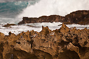 Ruddy Turnstones on rocks at Playa Jobos beach in Isabela Puerto Rico