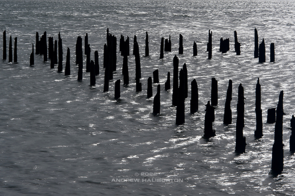 Pilings, Columbia River