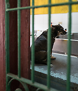 Chula sits on a counter in the kitchen area of Aniplant, Cuba.