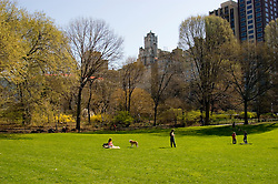 New York City, New York: Spring time with blossoms in Central Park  .Photo #: ny269-14733  .Photo copyright Lee Foster, www.fostertravel.com, lee@fostertravel.com, 510-549-2202.