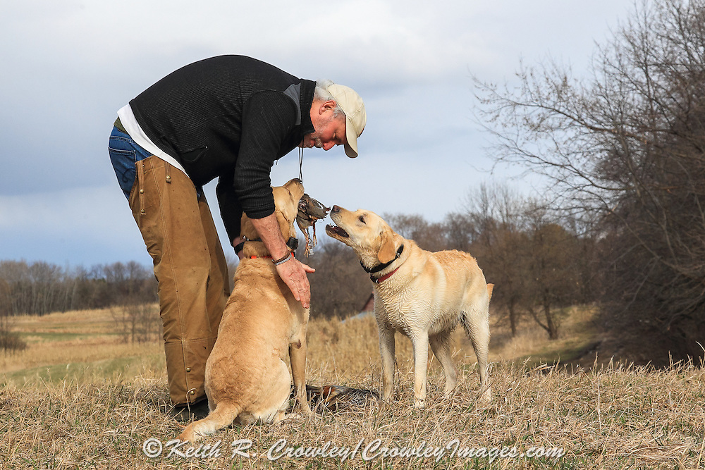 Training a young lab using Chukars at Marsh Lake preserve in Victoria, MN