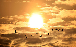 Wild geese fly over Mayinghu Lake in Duchang, east China's Jiangxi Province, March 27, 2013. As the weather turned warm, a large number of migratory birds recently left here to fly north., March 27, 2013. Photo by Imago / i-Images...UK ONLY.