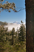 View of El Teide, from the east, in Parque Natural de Corona Forestal, Tenerife, Spain