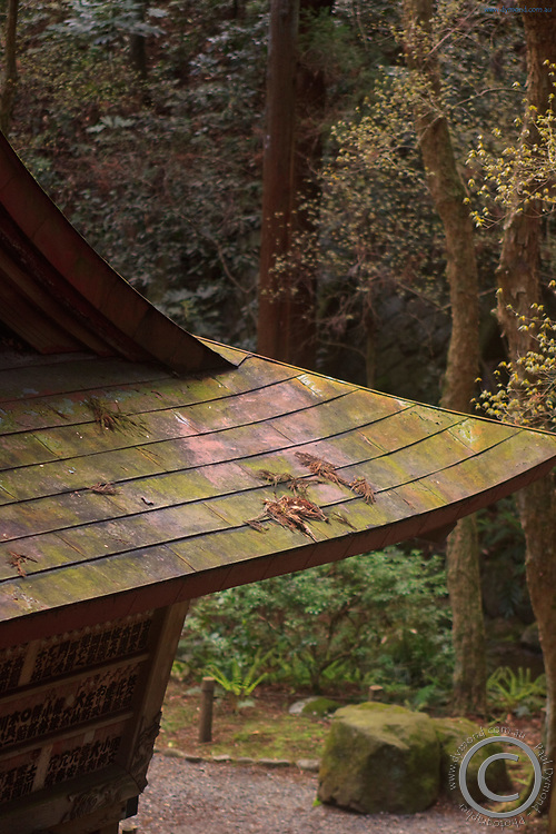 Leaves and moss collect on the old wooden roof of a small building with the gardens of Narita Jinja (Shrine), a large Shinto shrine in the heart of Narita CIty, Japan