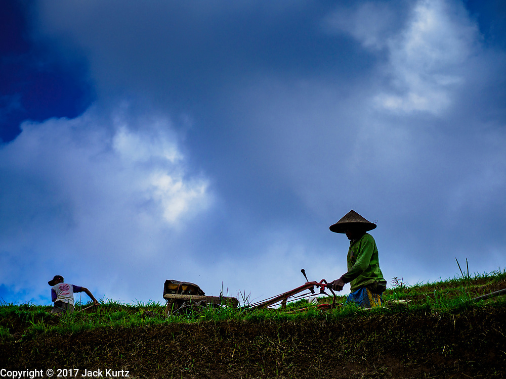 28 JULY 2017 - JATILUWIH, BALI, INDONESIA:  A farmer tills his rice paddy near Jatiluwih, in central Bali. Rice is the most important crop grown on Bali and is important as a food source and a symbol of Balinese culture.     PHOTO BY JACK KURTZ