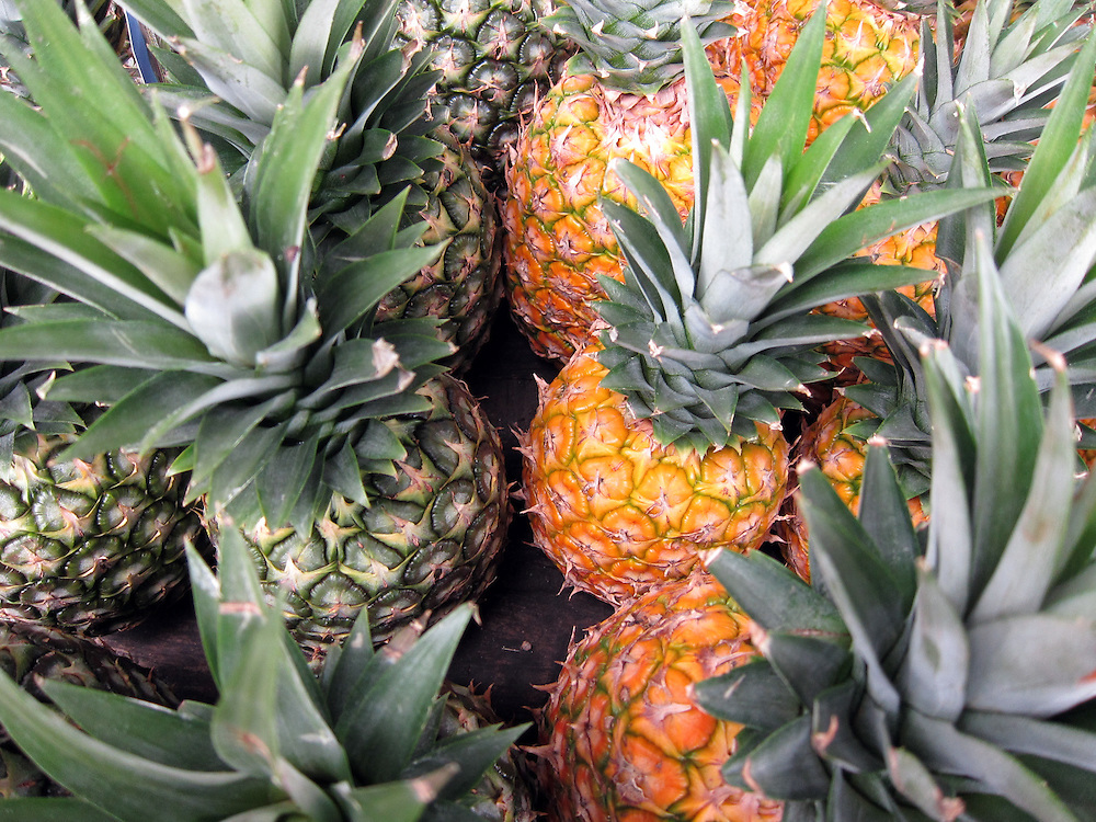 Pineaples in a street market along Highway 3 in Luquillo, Puerto Rico.