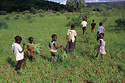 Vendan children sweep through a grassy field hunting for grasshoppers outside their small village of Masetoni, Mpumalanga, South Africa. (Man Eating Bugs page 136)