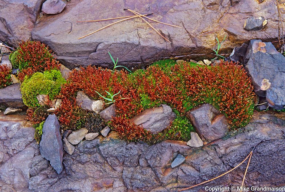 Moss and rock, Sudbury, Ontario, Canada