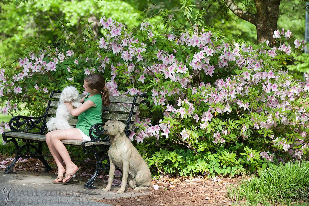 Azeleas bloom at Azelea Park in Summerville, SC.