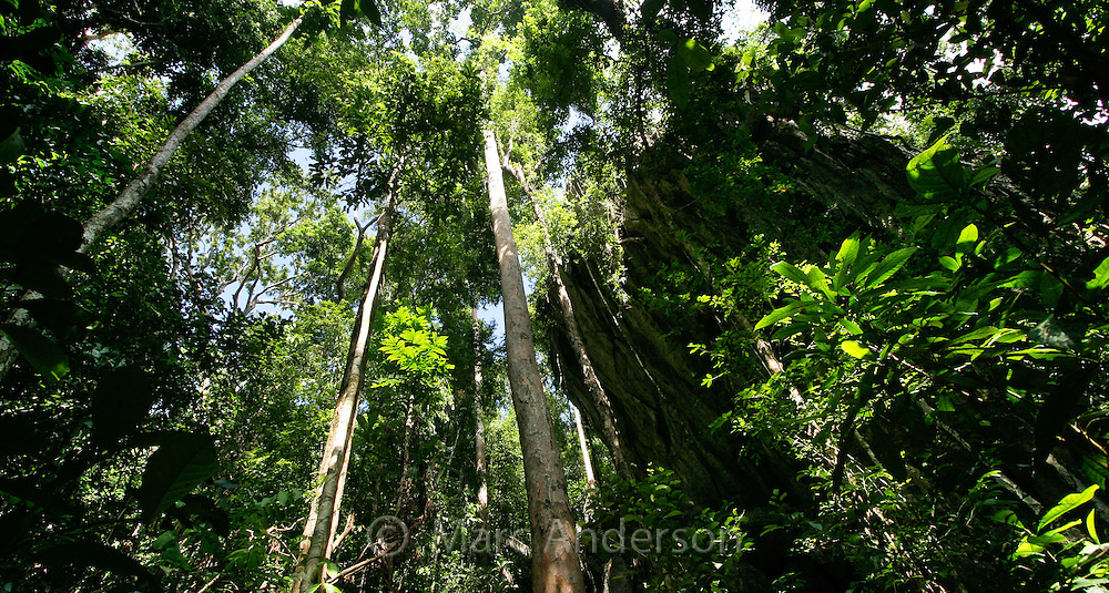 Tropical rainforest along the Monkey Trail in the Puerto Princesa Subterranean River National Park , Palawan, Philippines