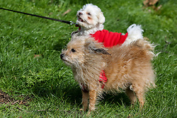 © Licensed to London News Pictures. 15/03/2019. London, UK. Dogs in Finsbury Park, north London during strong winds. Photo credit: Dinendra Haria/LNP