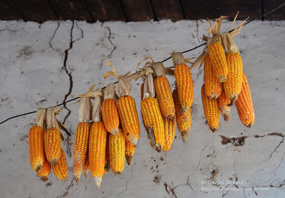 Guarani corn in Isosog