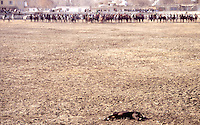 Fra en Buzkashi kamp på Kabul Stadion. Buzkashi er Afghanistans nasjonalsport og betyr geiteknabbing, From a Buzkashi match at Kabul Stadion. Buzkashi means goat fetching and is the Afghan national sport