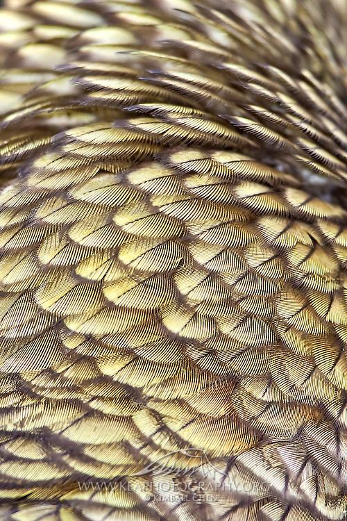 olive kea feathers