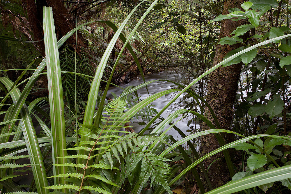Rainforest in New Zealand on the South Island