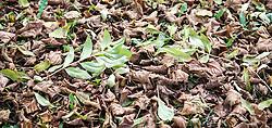 THEMENBILD - herbstlich gefärbte Blätter an einem sonnigen Herbsttag, aufgenommen am 22. Oktober 2015, Baumkirchen, Österreich // autumnal colored leaves on a sunny Autumn Day, Baumkirchen, Austria on 2015/10/22. EXPA Pictures © 2015, PhotoCredit: EXPA/ Jakob Gruber