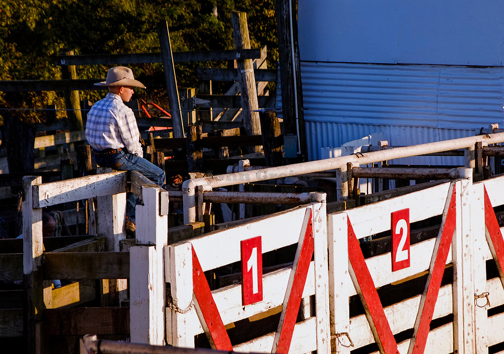 Aspiring cowboy watches the action from the bull riding fence.