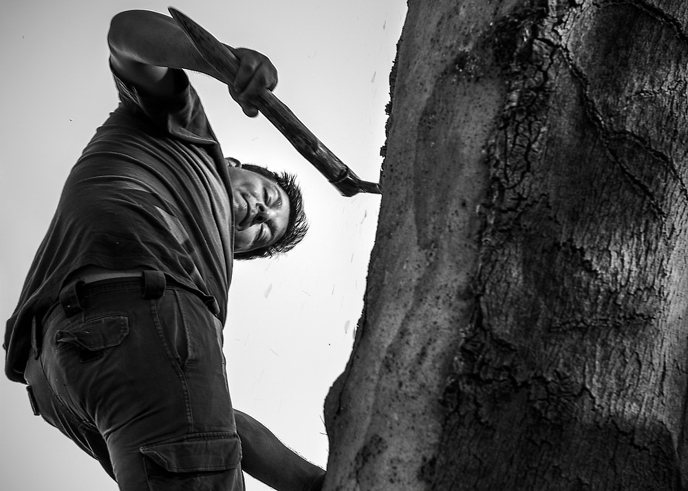 """Included in photographic documentary """"Traditional cork extraction in Portugal"""""""