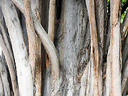 close up of a tree trunk Photographed in Madrid Botanical Gardens