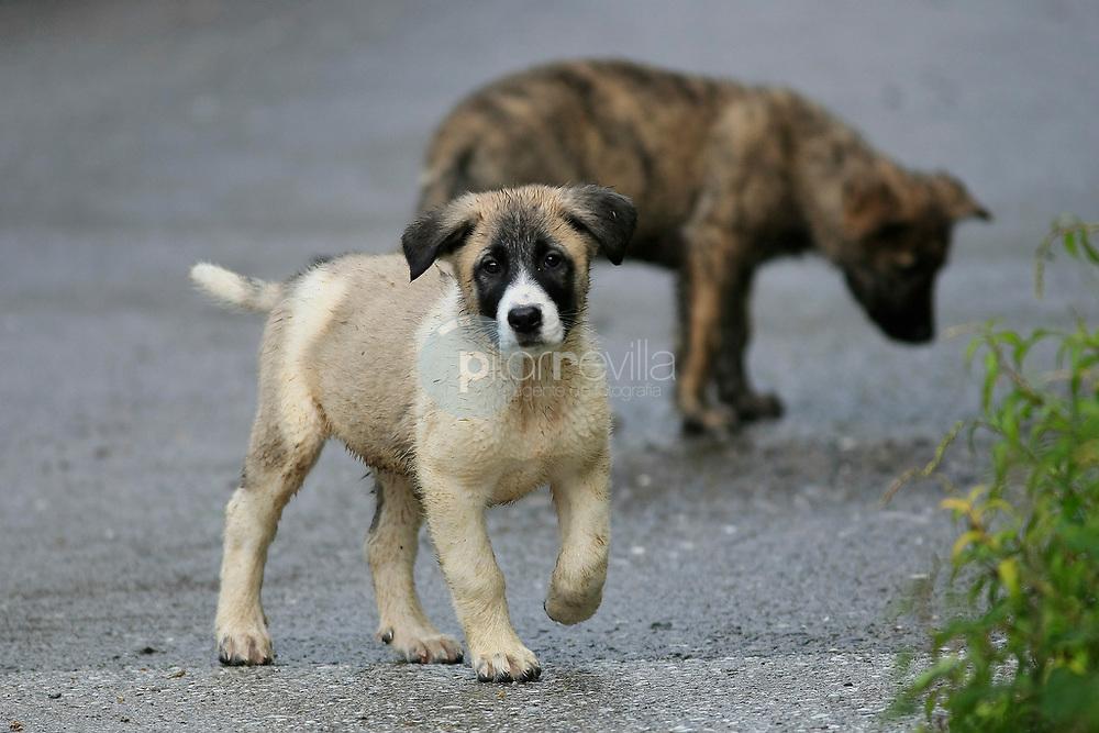 mascotas © / PILAR REVILLA