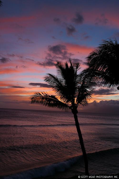 Maui, Hawaii sunset with palm silhouette