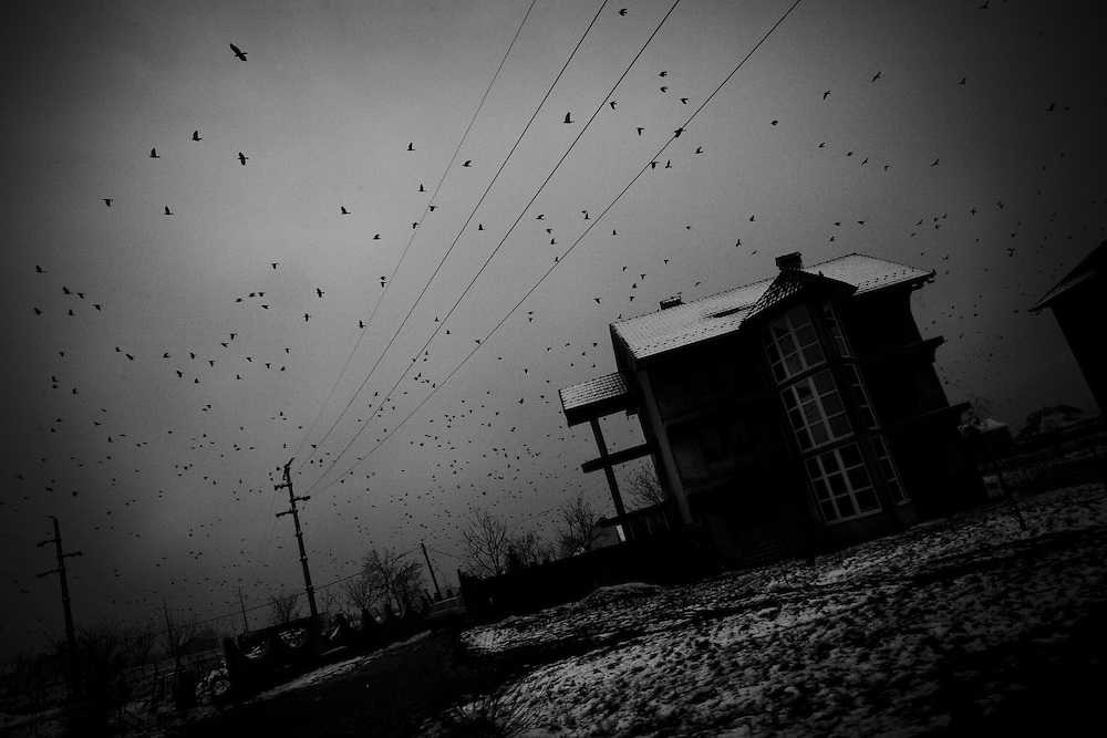 Crows fill the sky on the road to Mitrovica, Kosovo, on Nov. 30. 2007.