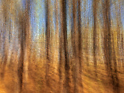 Motion study of coniferous forest, Birds Hill Provincial Park, Manitoba, Canada