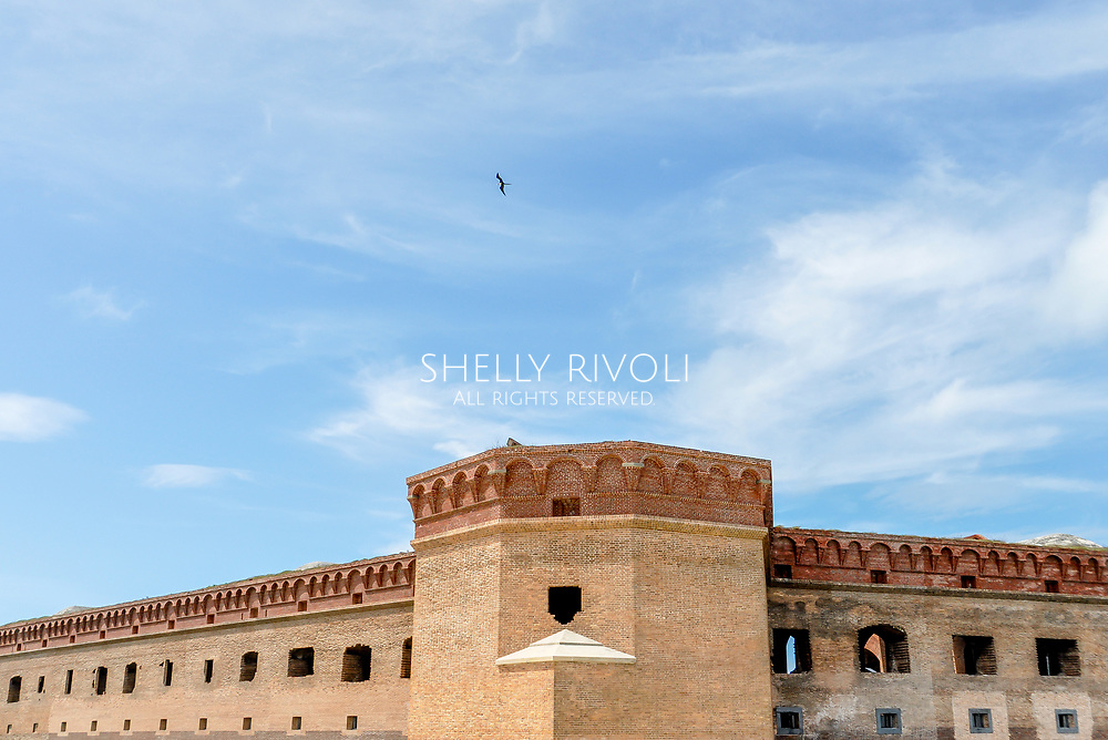 A sea bird soars above Fort Jefferson's roof at Dry Tortugas National Park, in Florida. Architectural shot with blue sky above bricks. Room for text.