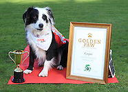 Gain Golden Paw Awards