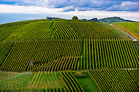 Vineyards, Offenburg, Baden-Württemberg, Germany