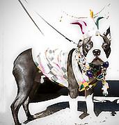 Krewe of Barkus Mardi Gras dog parade