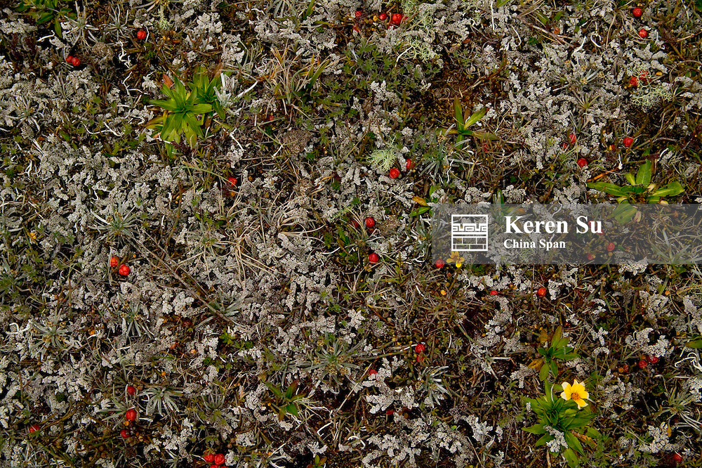 Meadow In Cotopaxi National Park, near Quito, Ecuador