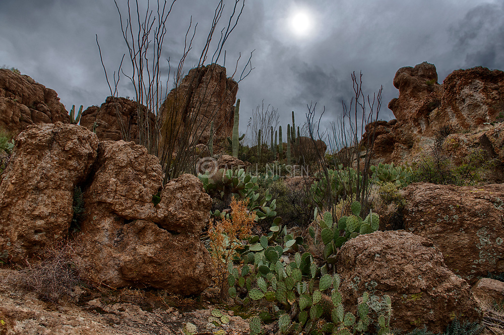 Beautiful desert landscape with cacti vegetation in The Superstitions, Arizona